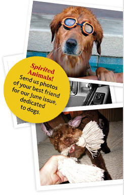 Dog photo contest for Spirit magazine