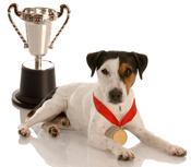 Jack Russell with trophy and gold medal