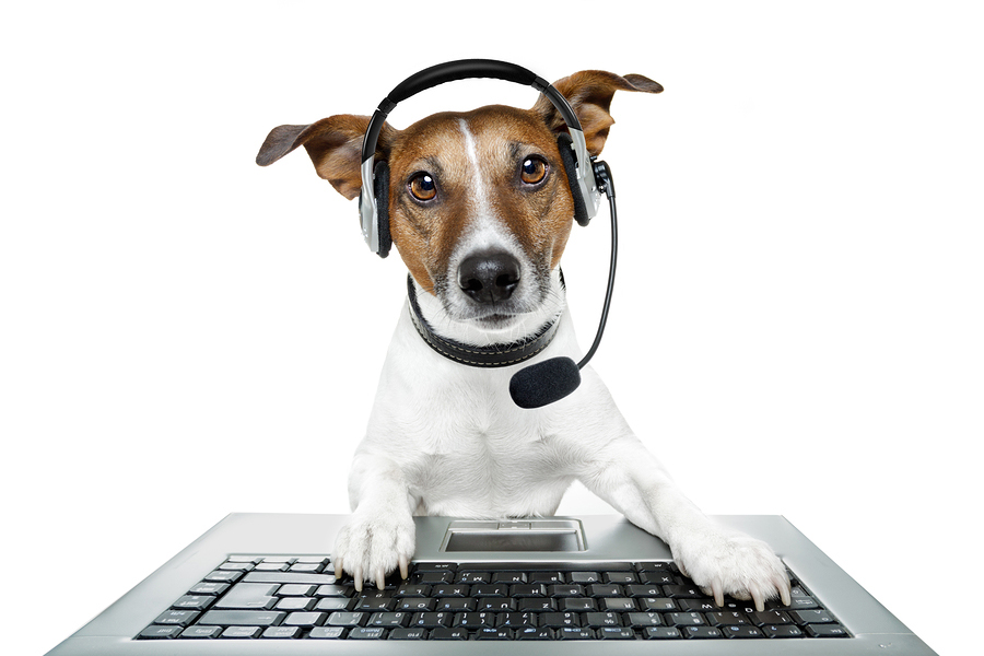 dog with headset for podcast