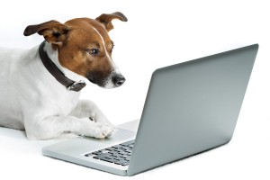 dog at laptop computer requesting a book review